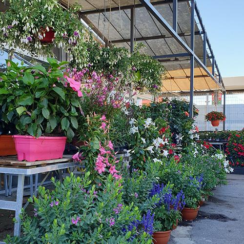 plantes d'extérieurs